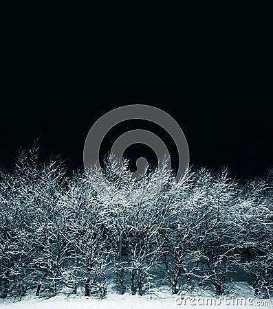 Free Winterscape Stock Photo - 577180