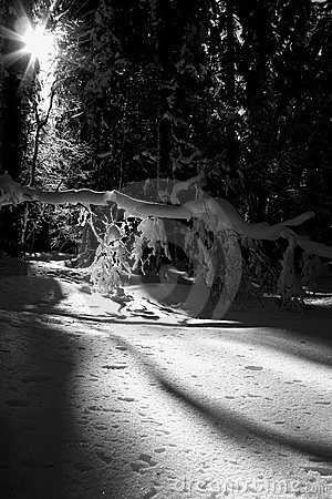 Wintertime (BW)