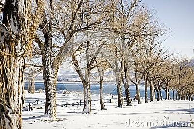 Wintertime trees