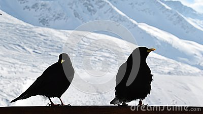 Winther birds