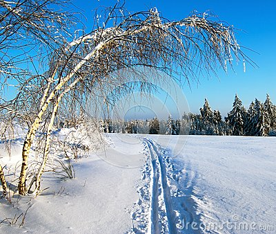 Wintry evening view cross country skiing way with