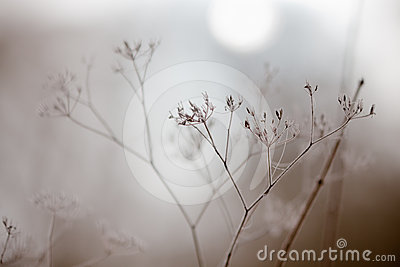 Wintry fog