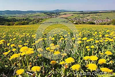 Wiosna czas i łąka z pospolitym dandelion
