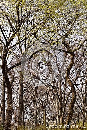 Wiosna drzewa