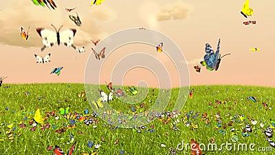 Wiosna motyl