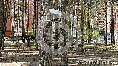 Wiosny sceneria z handmade drewnianym birdhouse dla ptasiego karmienia, zdjęcie wideo