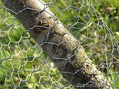 Wire mesh and tree