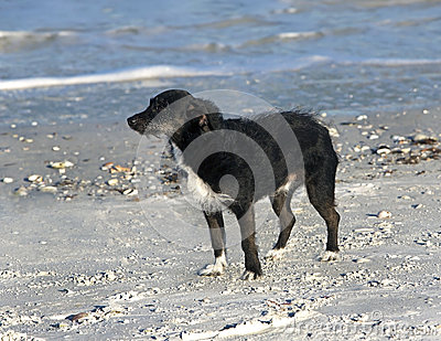 Wirehaired Terrier mixed breed dog