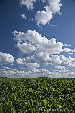 Wisconsin cornfields and skies
