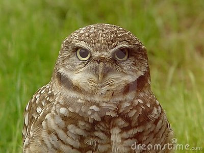 Wise Old Owl Stock Photo