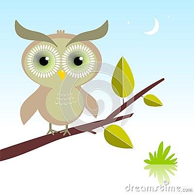 Wise Owl bird