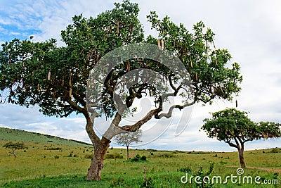 The Wisp Tree
