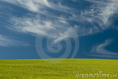 Wispy Clouds over the meadow
