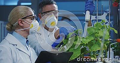 Wissenschaftler, die eine Gr?npflanze ?berpr?fen stock video footage