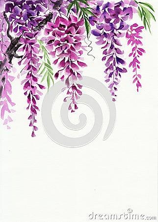 Free Wisteria Blossom Stock Photography - 56522292