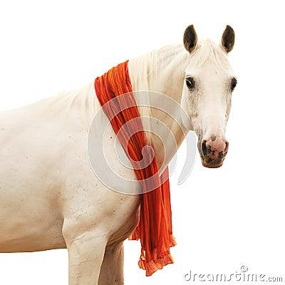 Wit paardportret dat op wit wordt geïsoleerda