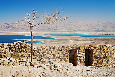 Withered tree in Masada, Israel
