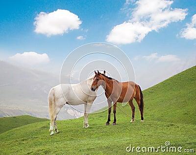 Witte en bruine paarden