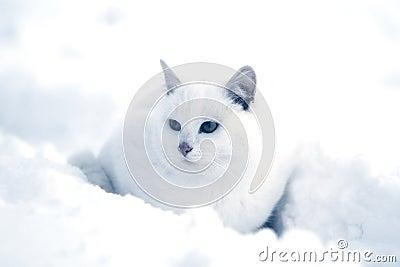 Witte kat in sneeuw