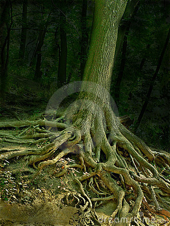 Wizard tree with roots