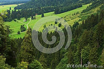Wälder in den Alpen