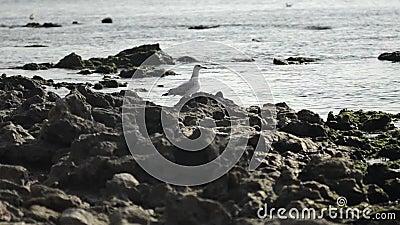 Wod morskich małe fale wśród skał dennymi brzeg zbiory wideo