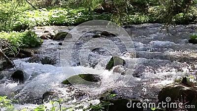 Woda na maÅ'ej rzece. Åšwieża woda na maÅ'ej rzece zdjęcie wideo