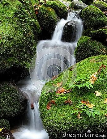 Wodospad leśna