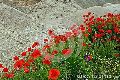 Woestijn en bloemen 1