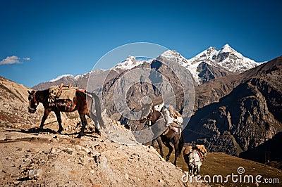 Wohnwagen der Pferde