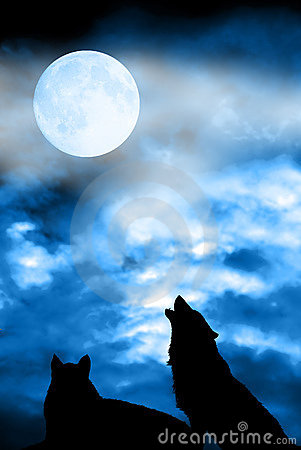 Wolf couple howling to moon