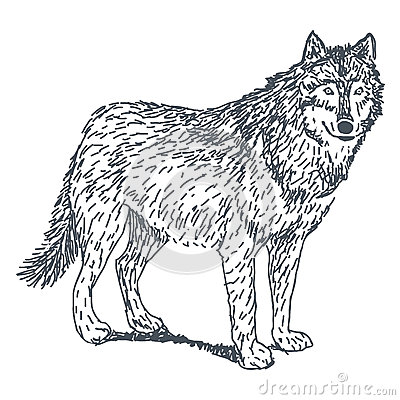 Wolf drawing stock vector image 48437011 for Lupo disegno a matita