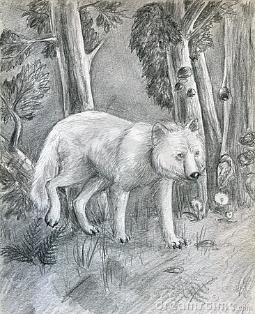 Wolf in the forest - sketch