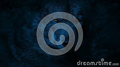 Wolf Growls With Glowing Eyes en la noche almacen de video