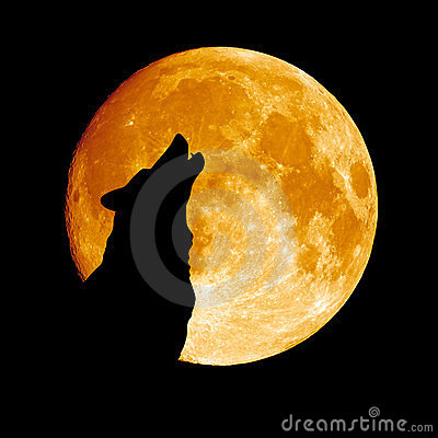 Free Wolf Howling At The Moon Royalty Free Stock Images - 23738549