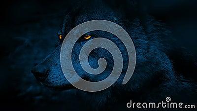 Wolf Side View With Glowing observa en la noche almacen de video