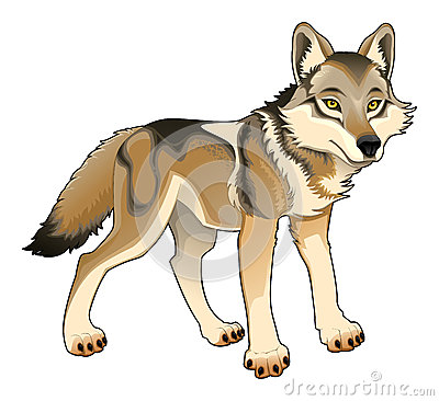Wolf. Vector isolated character