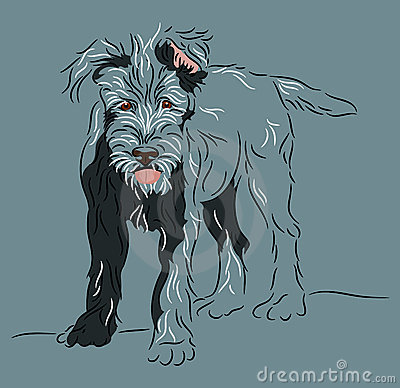 Wolfhound puppy standing pose