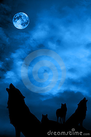 Free Wolves Pack Stock Photography - 12302132