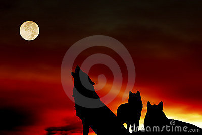 Wolves pack with moon
