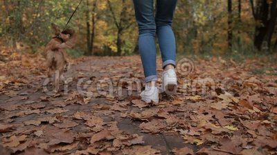 Woman with adorable dog jogging in autumn park stock video footage