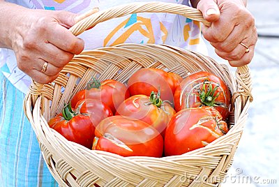 Woman with big tomatoes in a basket