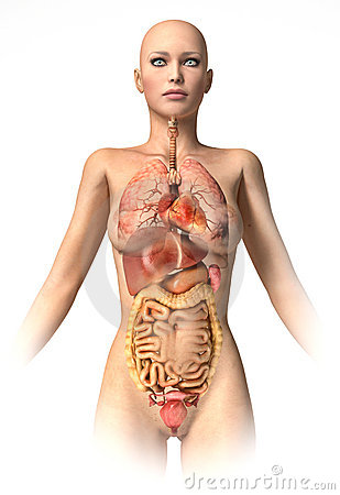 Woman body  with interior organs superimposed.