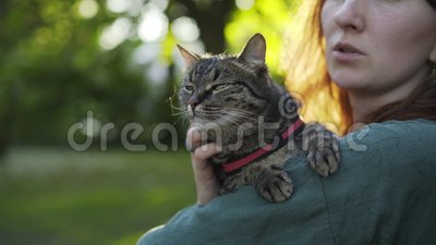 Woman with cat in park. Close-up cat on hands, girl caress pet, blurred green forest at background stock footage