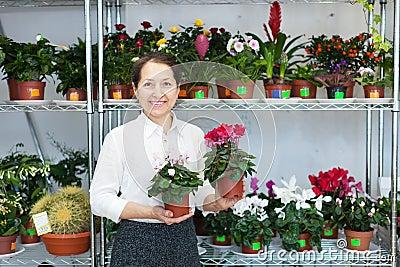 Woman chooses Cyclamen plant