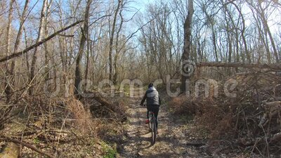 Woman cyclist riding mountain bike. Cycling along the forest road on sunny day. Adventure Lifestyle Concept. Woman cyclist riding mountain bike. Cycling along stock footage