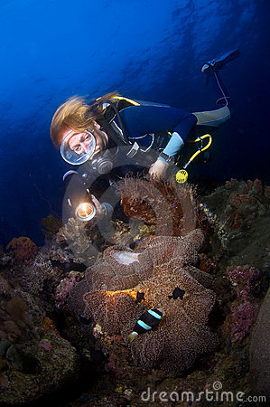 Woman diver above anemone. Indonesia Sulawesi