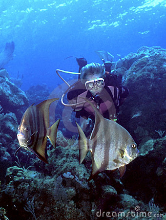 Free Woman Diver And Spadefish Stock Photo - 337010