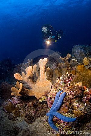 Woman diver pointing above reef. Indonesia Sulawesi
