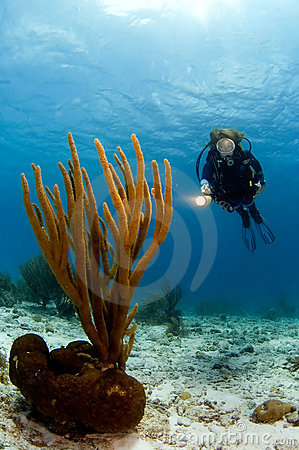Woman diver pointing light at Caribbean soft coral